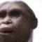 Новости об останках гоминина – найдена ли разгадка хоббитов?